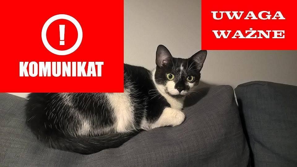 Do mieszkania na Pradze weszli złodzieje. Podczas włamania uciekł ukochany kot właścicielki.