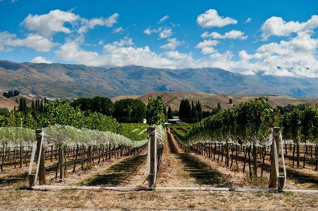 Winnica w Gibbston Valley