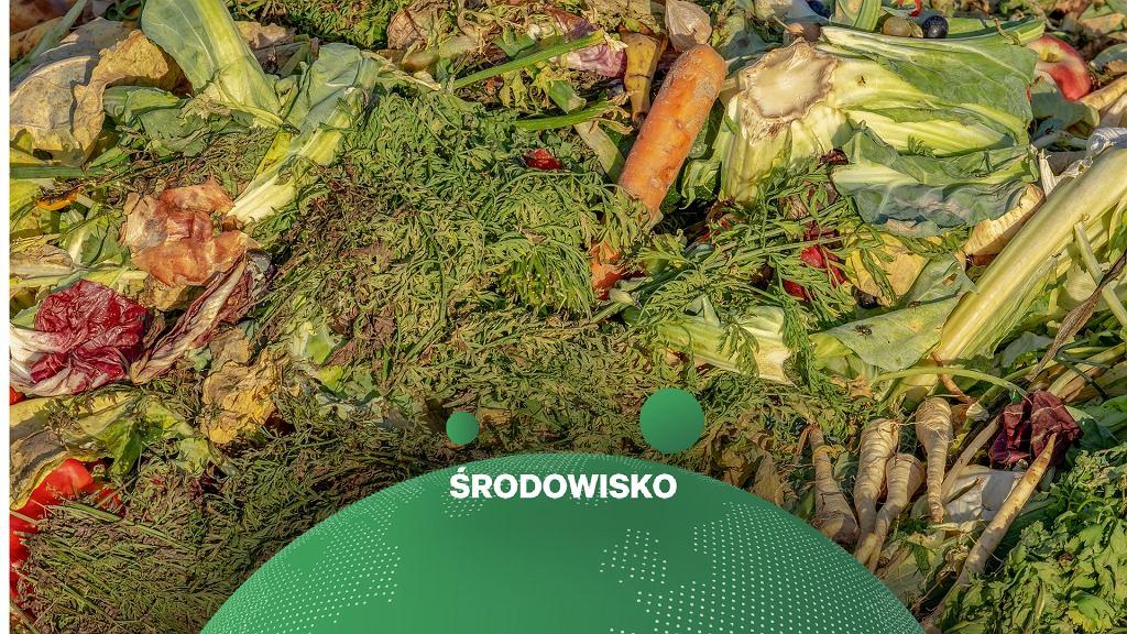 Marnowanie żywności - zdjęcie ilustracyjne