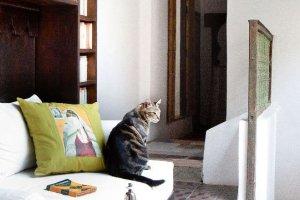 Wnętrza: w sercu Marrakeszu