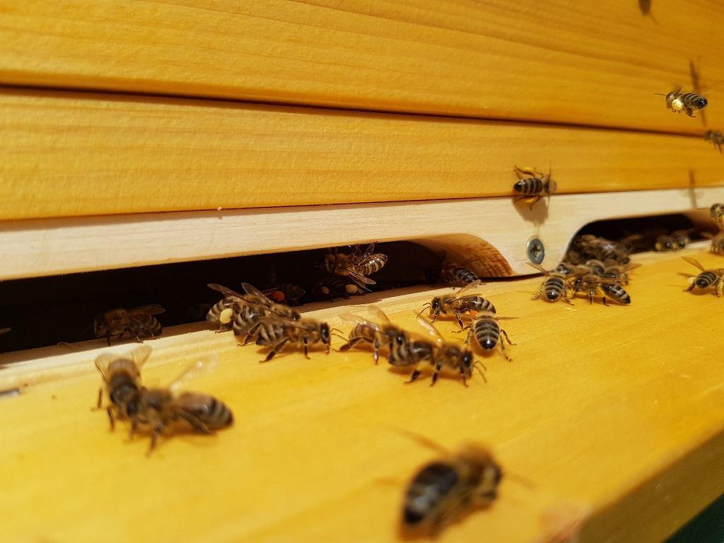 Warsztaty pszczelarskie Klubu Gaja.