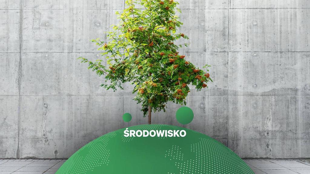 Gdańsk. Wytną drzewa i zasadzą nowe w donicach