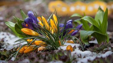 Wiosna tylko w kalendarzu. Kiedy nadejdzie ocieplenie?