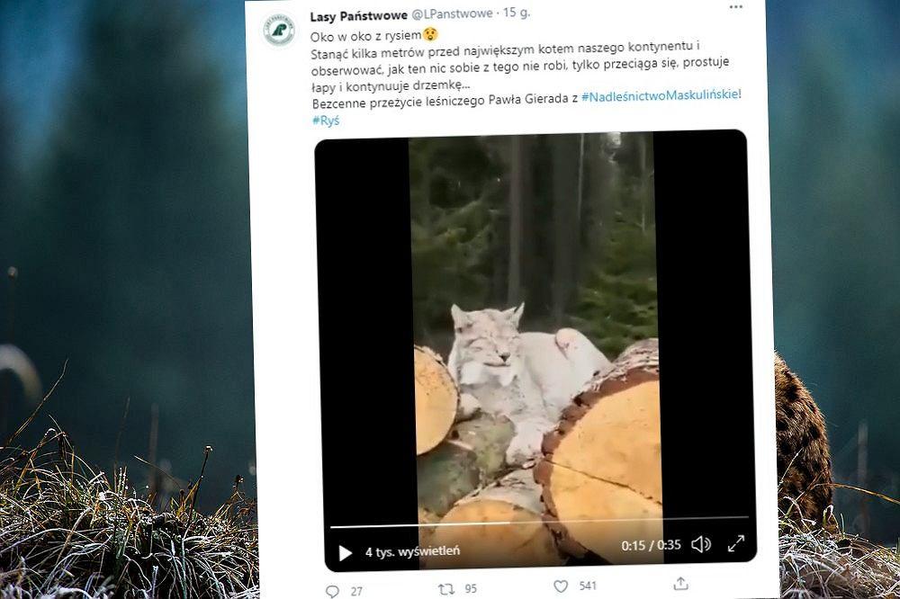 Leśniczy uwiecznił swoje spotkanie z rysiem na filmie wideo
