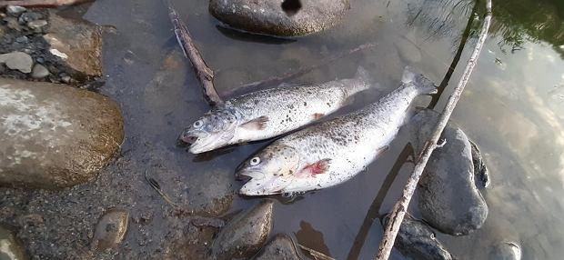 Ścieki spływające do rzek i niski stan wody zagrażają rybom
