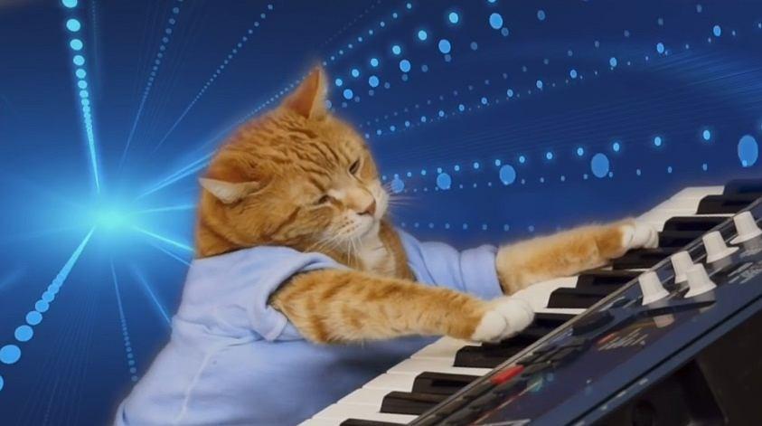 Kot grający na pianinie
