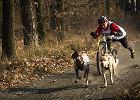 Zobacz niesamowitą galerię psów biegających w zaprzęgach [ZDJĘCIA]