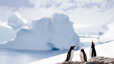 Antarktyda jest najszybciej ocieplającym się kontynentem
