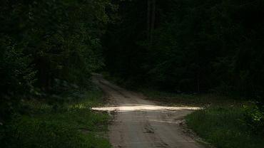 Ciało prostytutki odnalezione w lesie w Słubicach