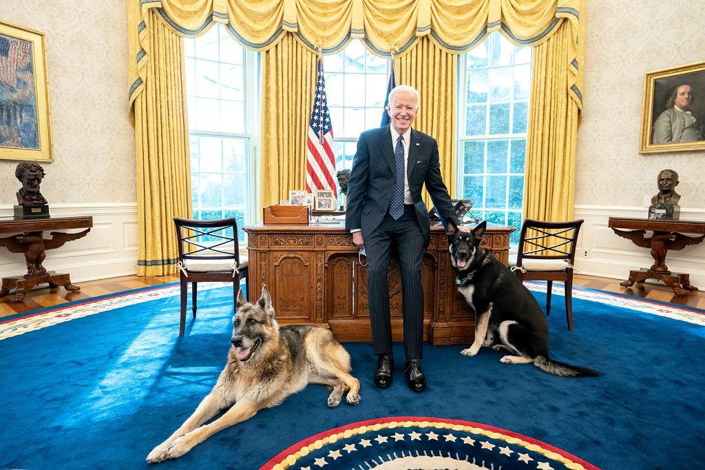 Prezydent Joe Biden z owczarkami: Champem i Majorem