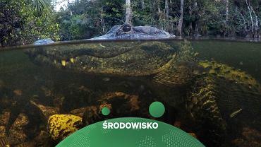 Wysychają bagna na Florydzie. Ekolodzy walczą o uratowanie parku narodowego Everglades