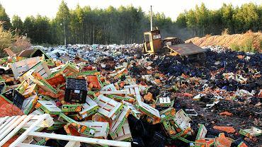 6.08.2018, okolice Smoleńska, buldożer niszczy brzoskwinie pochodzące z nielegalnego importu z krajów Unii Europejskiej.