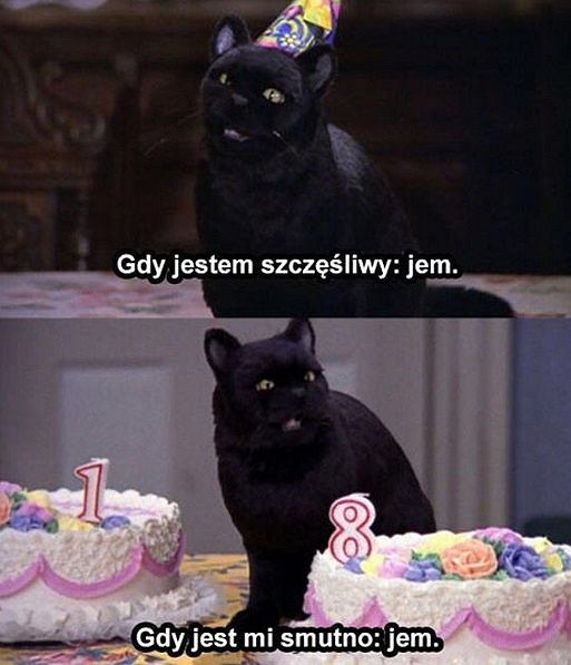 Kot Salem