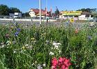 Bajecznie kolorowa kwietna łąka powstała w Krośnie. To efekt trendu panującego w polskich miastach