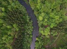 Amazonia znów pozbawiona pieniędzy. Norwegia też zakręca kurek z euro