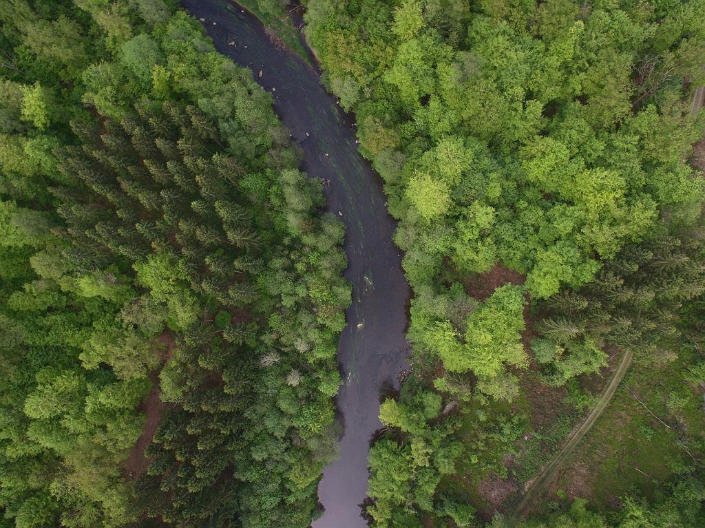 Amazonia zagrożona