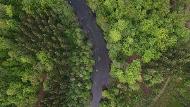 Amazonia znów pozbawiona pieniędzy. Norwegia przyłącza się do Niemiec i zakręca kurek z milionami