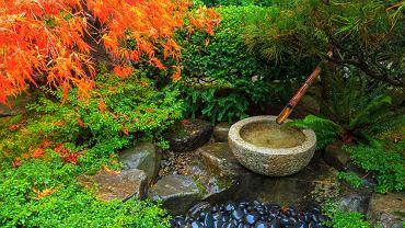 Japoński ogród - jak wygląda? Jak samemu zrobić ogród japoński? Zdjęcie ilustracyjne