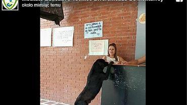 Pies zauważył, że ludzie płacą za jedzenie pieniędzmi. Przychodzi codziennie z liściem w pysku