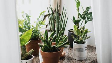 Jakie rośliny antysmogowe wybrać do domu, sypialni lub ogrodu?