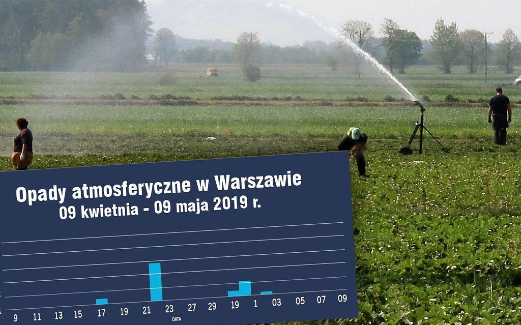 Plantacje muszą być nawadniane, są obszary, na których niemal nie padało