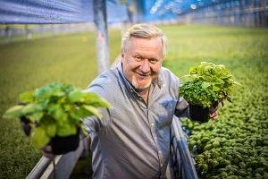 """2 ha pod szkłem i 10 mln doniczek z ziołami do sprzedaży. """"Żeby na pietruszce ukręcić 40 mln zł, trzeba się napracować"""""""
