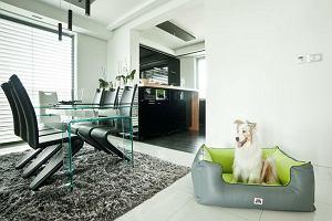 Kącik dla zwierzaka w mieszkaniu - jak urządzić?