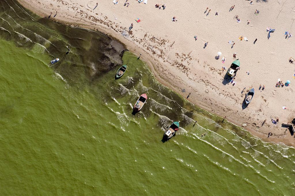 Atak sinic na plaże w Sopocie
