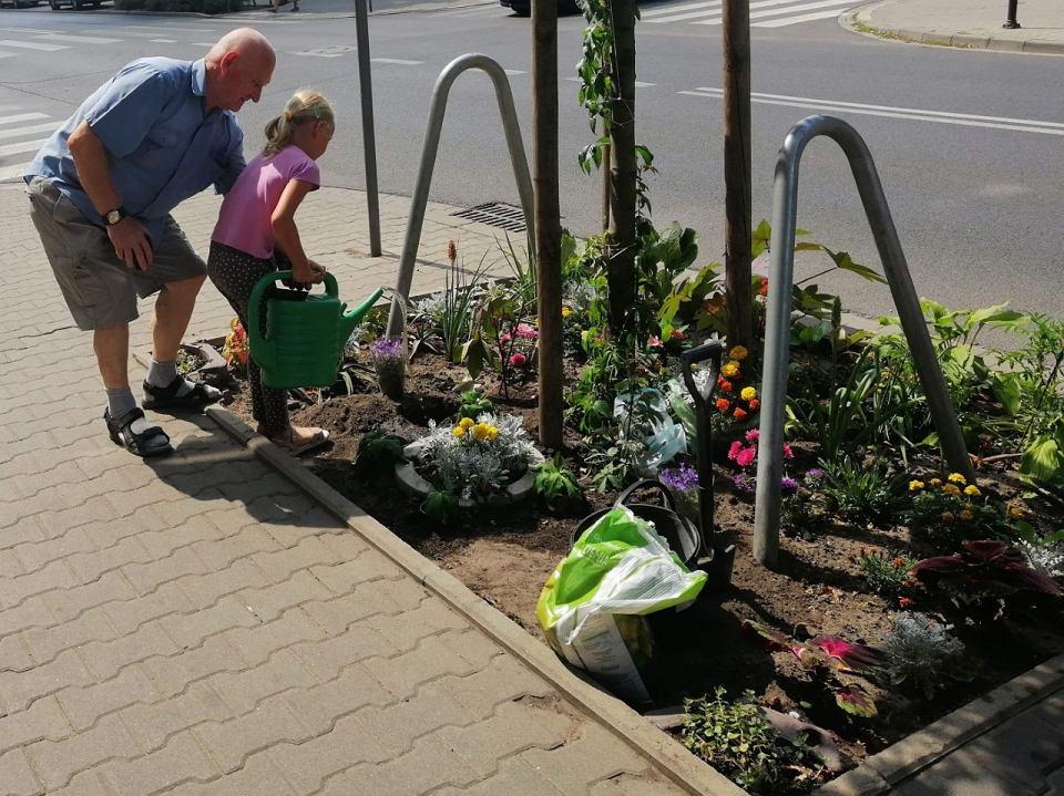 Pyry Tygodnia Biała Dla Wytrwałego Miejskiego Ogrodnika