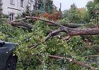 Powalone przez wiatr drzewo spadło na samochód. Kierowca nie żyje. Dwie osoby ranne