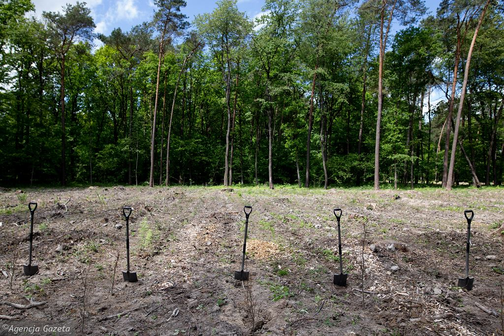 Sadzenie lasu na terenie Regionalnej Dyrekcji Lasów Państwowych w Lublinie.