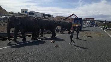 Hiszpania. Przewróciła się ciężarówka ze słoniami cyrkowymi
