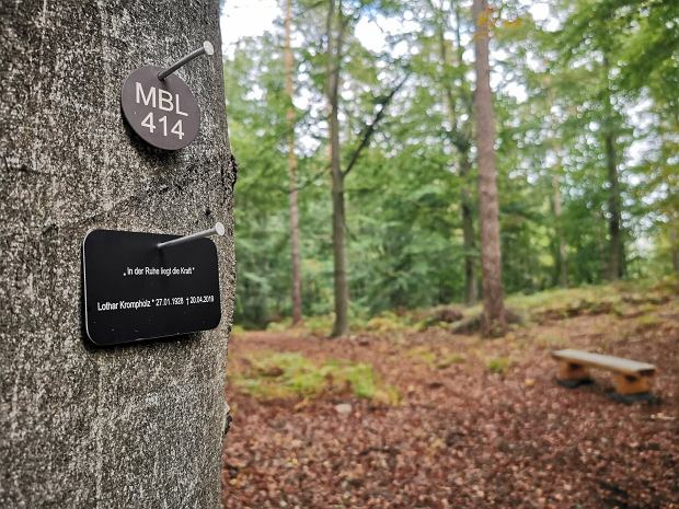 Ceny: od 770 euro za jedno miejsce do co najmniej 2490 euro za drzewo, pod którym spocząć może nawet 20 osób / Fot. Dorota Salus