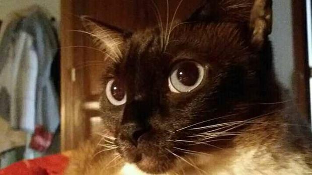 Zdjęcie numer 27 w galerii - Karmel, Daktyl, Kapitan Benny, Ptyś, Wiesław... Kochane i piękne - oto Wasze koty [GALERIA NA DZIEŃ KOTA]