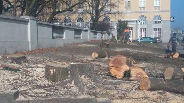 Wycinka drzew przy parku Wilsona