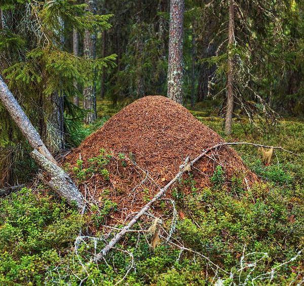 Demokracji możemy uczyć się mrówek