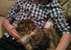 Kamil Stoch odpoczywa z pięknym kotem (i nie jest to Maciek)