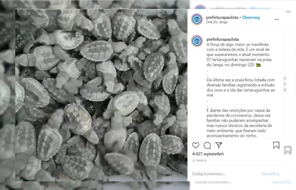 Prawie 100 zagrożonych wyginięciem żółwi wykluło się na plaży
