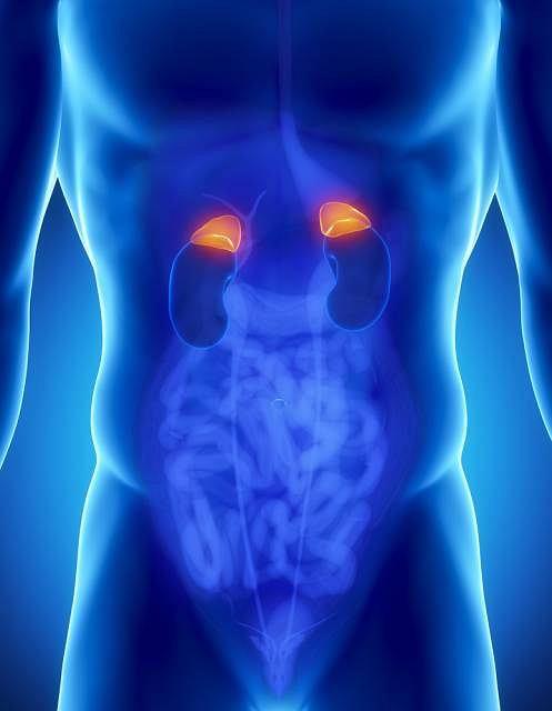 Jednym z wytwarzanych przez nadnercza hormonów jest kortyzol, czyli hormon stresu