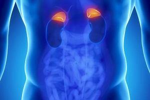 Hormony nadnerczy - na co wpływają i jak działają?