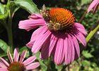 W Bielsku-Białej powstanie Tajemniczy Ogród. Zamieszkają w nim tysiące pszczół