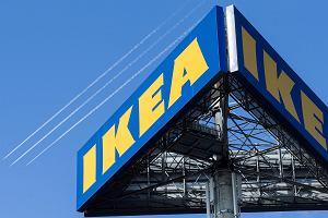 Ikea buduje największy sklep na świecie i szykuje się do produkcji mebli ze słomy