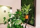 W Bielsku-Białej powstała pierwsza w Polsce Tlenodajnia. Dzięki roślinom można tutaj pooddychać czystym powietrzem