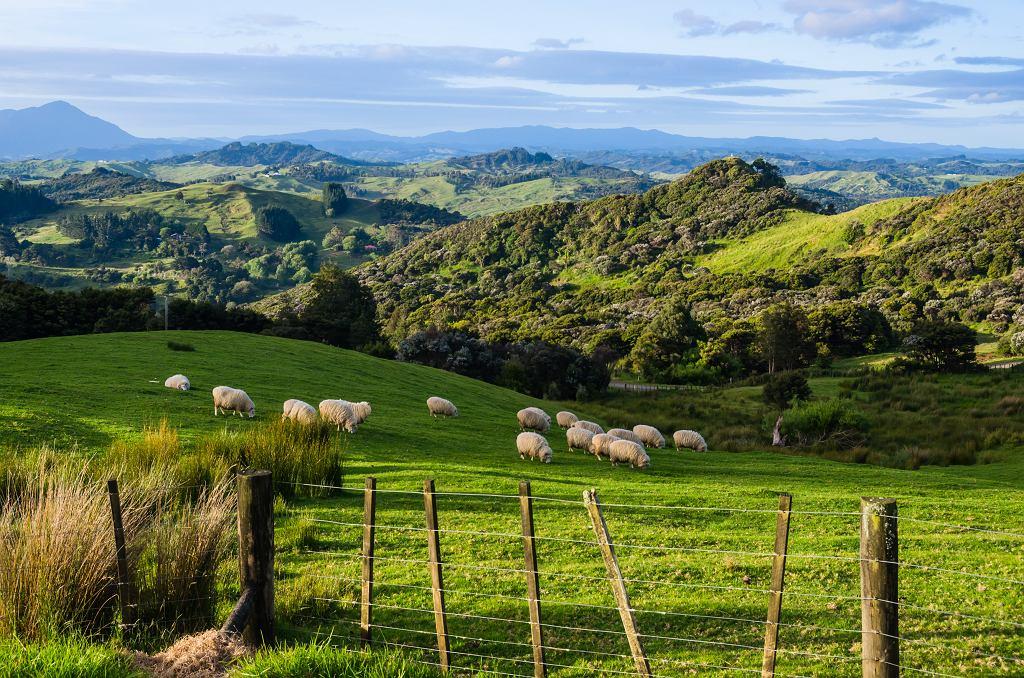 Farma w Nowej Zelandii - zdjęcie ilustracyjne/Fot. www.shutterstock.com/