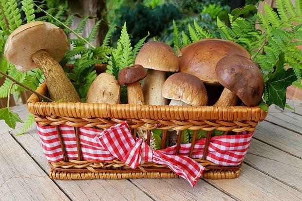 Sezon na grzyby trwa! Sprawdź, jakich akcesoriów nie może zabraknąć prawdziwemu grzybiarzowi!