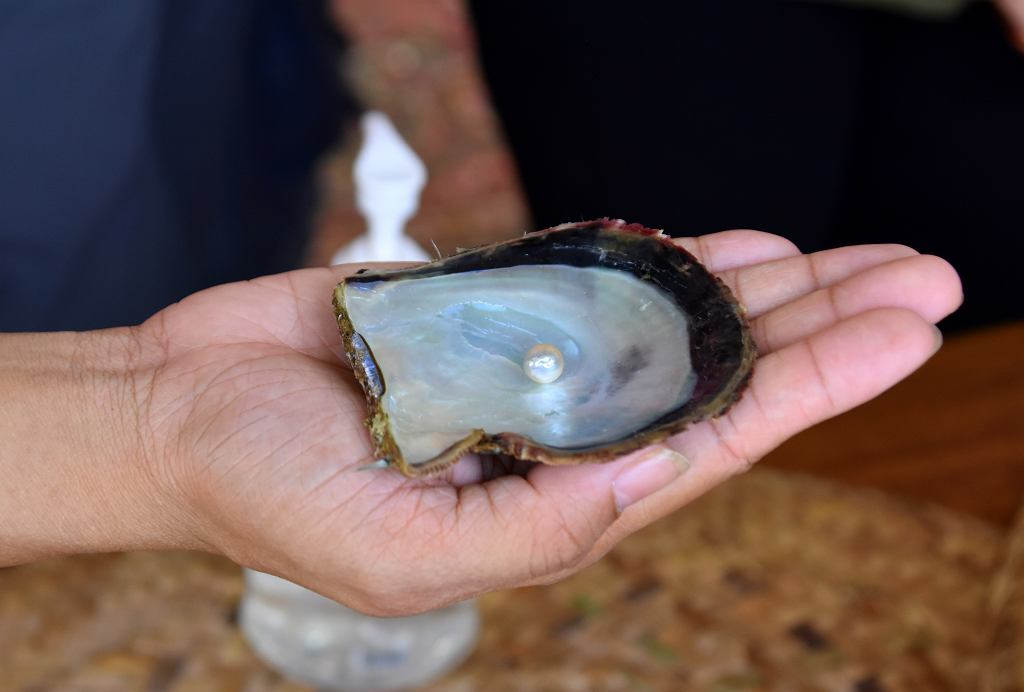 Suwaidi Pearls Farm