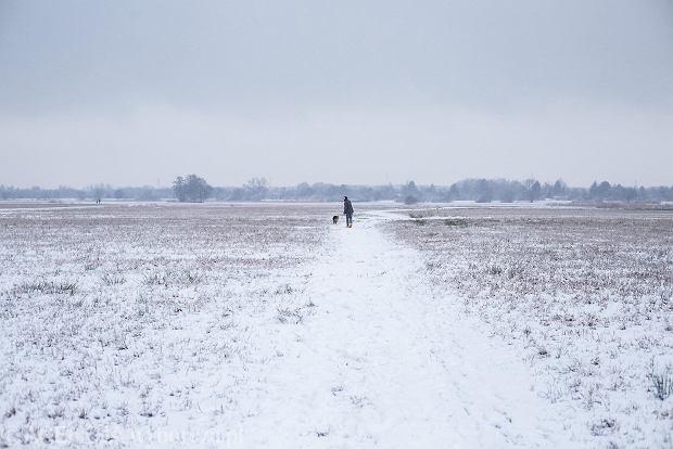 Zdjęcie numer 34 w galerii - Zima w Krakowie - śnieg przykrył ulice, domy, parki [GALERIA]