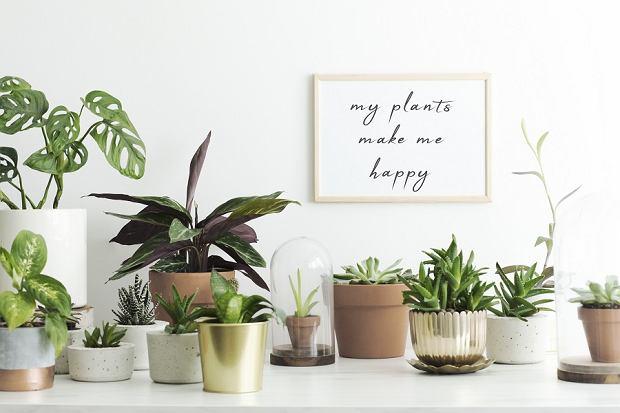 TOP 10 roślin doniczkowych, które warto mieć w swoim domu