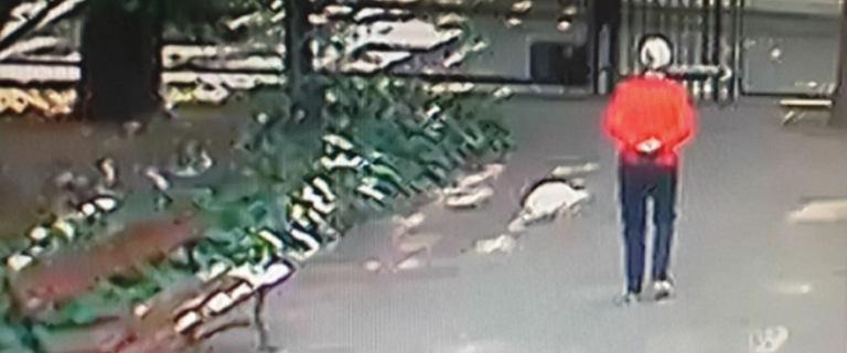 78-letnia kobieta się odnalazła. Pani Bogumiła była 6 km od miejsca zamieszkania