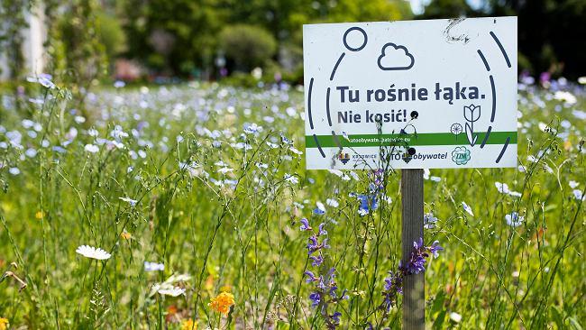Kosić trawniki czy nie kosić? Przede wszystkim zieleń trzeba traktować mądrzej